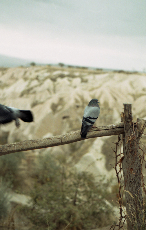 Pigeons in Cappadocia, Turkey.